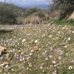 Kreta Frühling